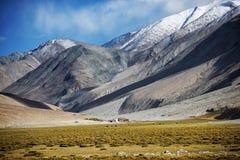 Chaîne de montagne de champ et de neige Photographie stock libre de droits