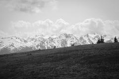 Chaîne de montagne du nord-ouest avec Dears, B/W photographie stock libre de droits