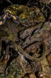 Chaînes, corde et maillage des déchets de rebut dans la boue gluante sur la Tamise, Londres image libre de droits