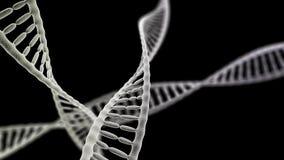 Chaînes d'ADN sur le fond noir Photographie stock libre de droits