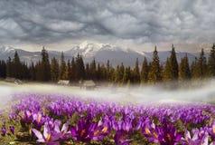 Chaînes de montagne de l'Ukraine Photographie stock