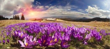 Chaînes de montagne de l'Ukraine Photos stock