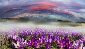 Chaînes de montagne de l'Ukraine Images libres de droits