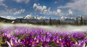 Chaînes de montagne de l'Ukraine Photo libre de droits