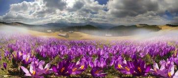 Chaînes de montagne de l'Ukraine Image stock