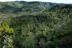 Chaînes de Waitakere - Nouvelle-Zélande Images stock