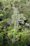 Chaînes de Waitakere - Nouvelle-Zélande Photo libre de droits