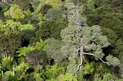 Chaînes de Waitakere - Nouvelle-Zélande Photographie stock libre de droits