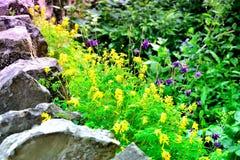 Chałupa ogródu szczegół Obrazy Stock
