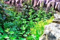 Chałupa ogródu szczegół Zdjęcia Stock