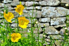 Chałupa ogródu szczegół Zdjęcie Stock