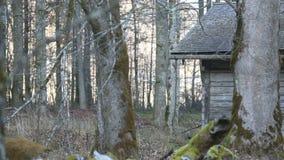 Chałupa w lesie zbiory