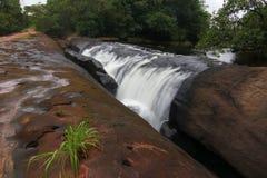'Cha Nan-' Wasserfall Bungkan Thailand Stockfoto