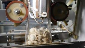 Cha?ne d'emballage des produits finis Machine d'emballage alimentaire Industrie de viande Tir du traitement des denr?es alimentai banque de vidéos