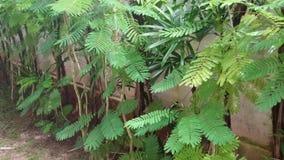Cha OM planta el árbol Imagen de archivo