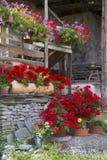 Chałupa kwiaty Fotografia Stock