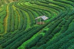 Chałupa na zbocze herbacie w Tajlandia Zdjęcia Royalty Free