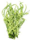 Cha Vegetable Isolated com fundo branco imagens de stock