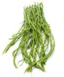 Cha Vegetable Isolated com fundo branco fotografia de stock