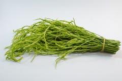 Cha vegetables Stock Photo