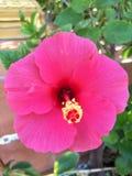 Chaba Dang, Blumen in den Töpfen lizenzfreie stockfotografie