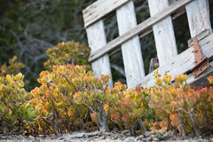 Chabet rośliny i Łamająca brama Obrazy Royalty Free