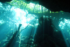 Chac Mool Cenote Royalty Free Stock Photography