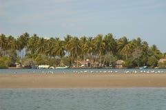 Chacahua Imagen de archivo