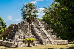 Chacchoben Mayan Ruins I Stock Photography