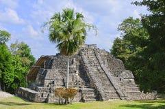 Chacchoben Mayan Temple, Costa Maya, Mexico Royalty Free Stock Images