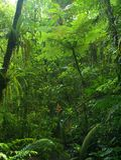 chachagua森林雨 免版税图库摄影