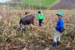 Chachapoyas - le Pérou Images stock