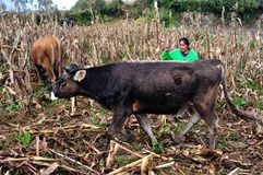 Chachapoyas - le Pérou Photos libres de droits