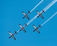 Chacun des cinq faucons argentés photographie stock libre de droits