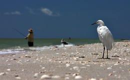 Chacun pêche ! Photo libre de droits