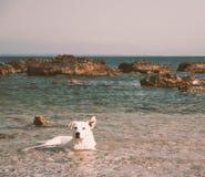 Chacun se baigner du ` s Photo stock