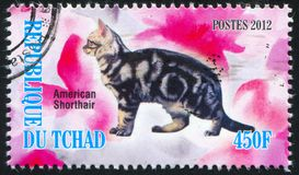 American shorthair cat. CHAD - CIRCA 2012: stamp printed by Chad, shows American shorthair cat, circa 2012 stock images