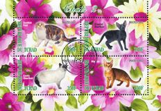 Exotic cat. CHAD - CIRCA 2012: stamp printed by Chad, shows exotic cat, circa 2012 stock photos