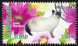 Exotic shorthair cat. CHAD - CIRCA 2012: stamp printed by Chad, shows Exotic shorthair cat, circa 2012 stock photo