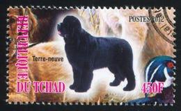 Newfoundland. CHAD - CIRCA 2012: stamp printed by Chad, shows Newfoundland, circa 2012 royalty free stock photography