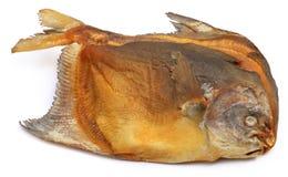 Chada secco di Rup del pesce dei pesci castagna Immagine Stock Libera da Diritti