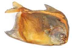 Chada secco di Rup del pesce dei pesci castagna Immagini Stock Libere da Diritti
