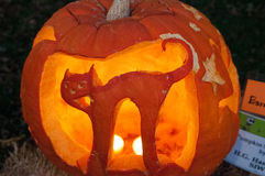 CHADDS FORD, PA - OKTOBER 26: Cat Pumpkin The Great Pumpkin snider att snida strid på Oktober 26, 2013 Royaltyfri Foto