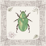 Chafer beetle drawing. Hand drawing rose chafer buds and leaves with decorative frame vintage engraving style vector illustration