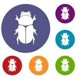 Chafer beetle icons set. In flat circle reb, blue and green color for web stock illustration