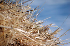 Chaff. Closeup on sky background Royalty Free Stock Photo