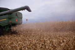 Chaff blowing out of a combine harvester. Chaff blowing out of the back of a combine harvester as it moves across a field harvesting the maize crop Royalty Free Stock Photo