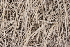 Chaff. Dry chaff in confuse texture Stock Photography