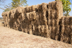 Chaff Stock Images