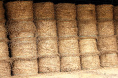 Chaff store food for horse and cow Stock Photos